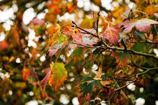Autumn has begun 2017